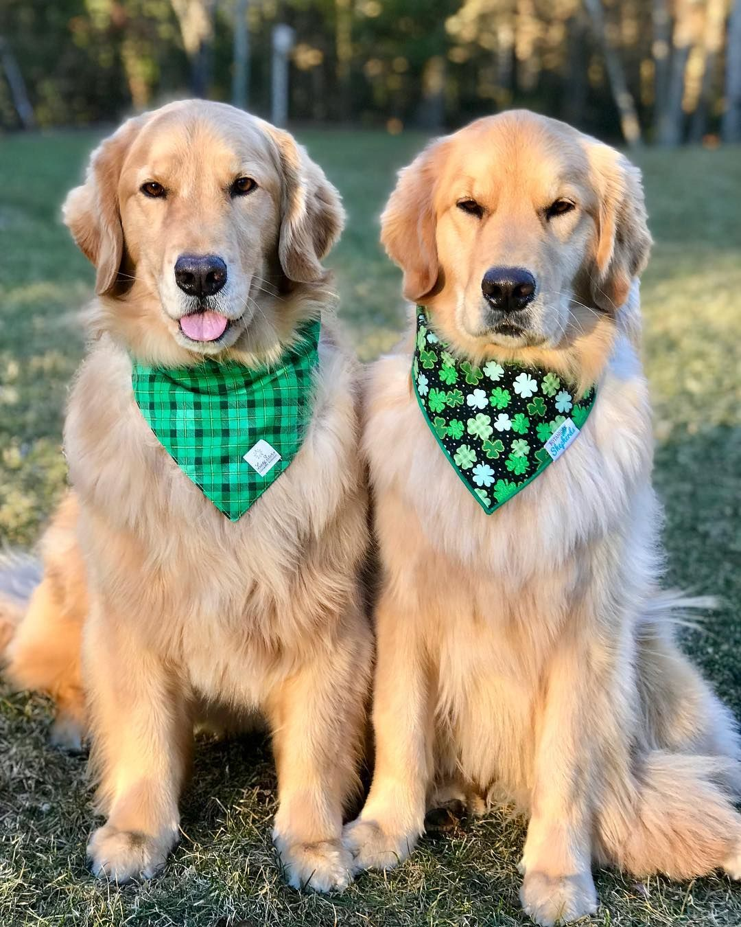 Rylie Chesney On Instagram Happy St Patrick S Day Furiends