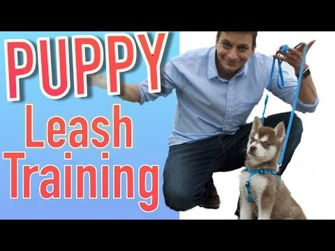 How To Train Your Dog To Stop Pulling On Leash Without Force And