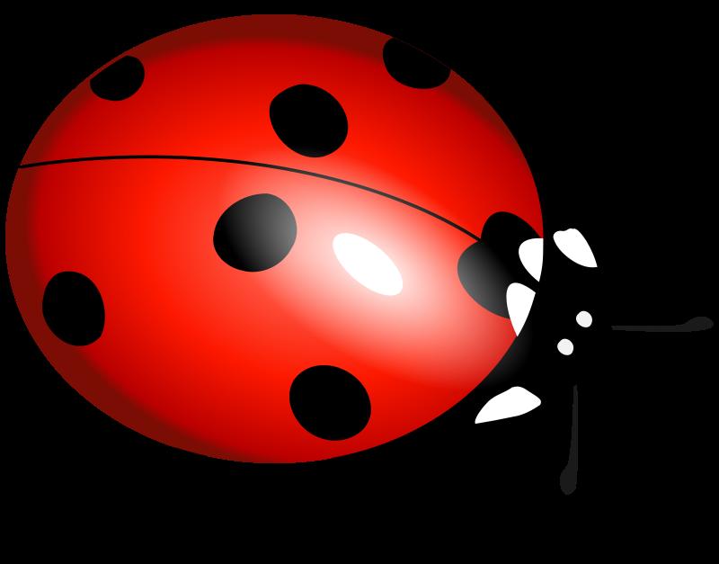 Clipart - Ladybug, Ladybirds, Boružė Ladybird, Ladybug, Insect Art