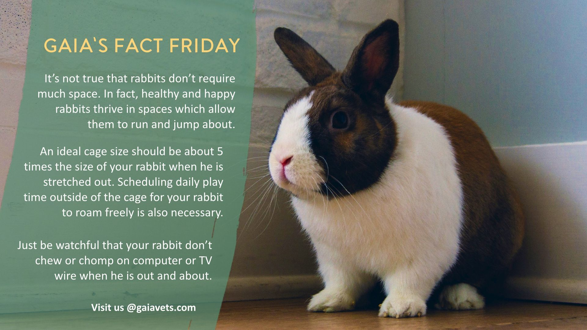 Be Sure To Give Them Some Space Sgpets Sgrabbits Housebunnies Loveanimals Freedom Animals Veterinary Pets