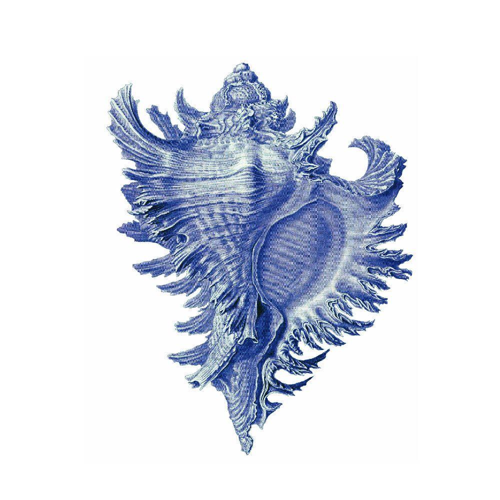 Blue Conch Shell Nautical Vintage Style Art Print Beach House Decor Arte En Lienzo Pinturas Dibujo Del Mar