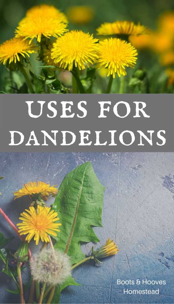 Dandelion Uses Benefits In 2020 Dandelion Herb Garden Design Diy Herb Garden