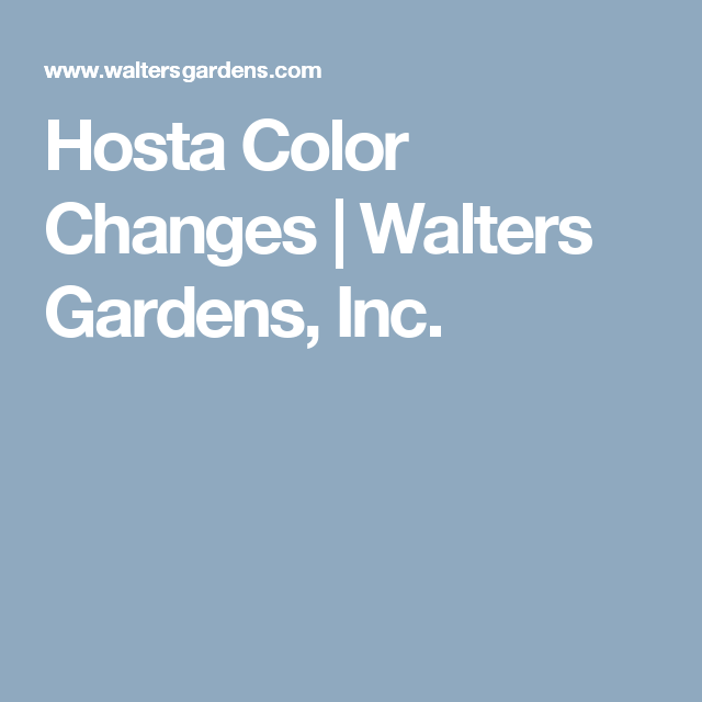Hosta Color Changes | Walters Gardens, Inc.