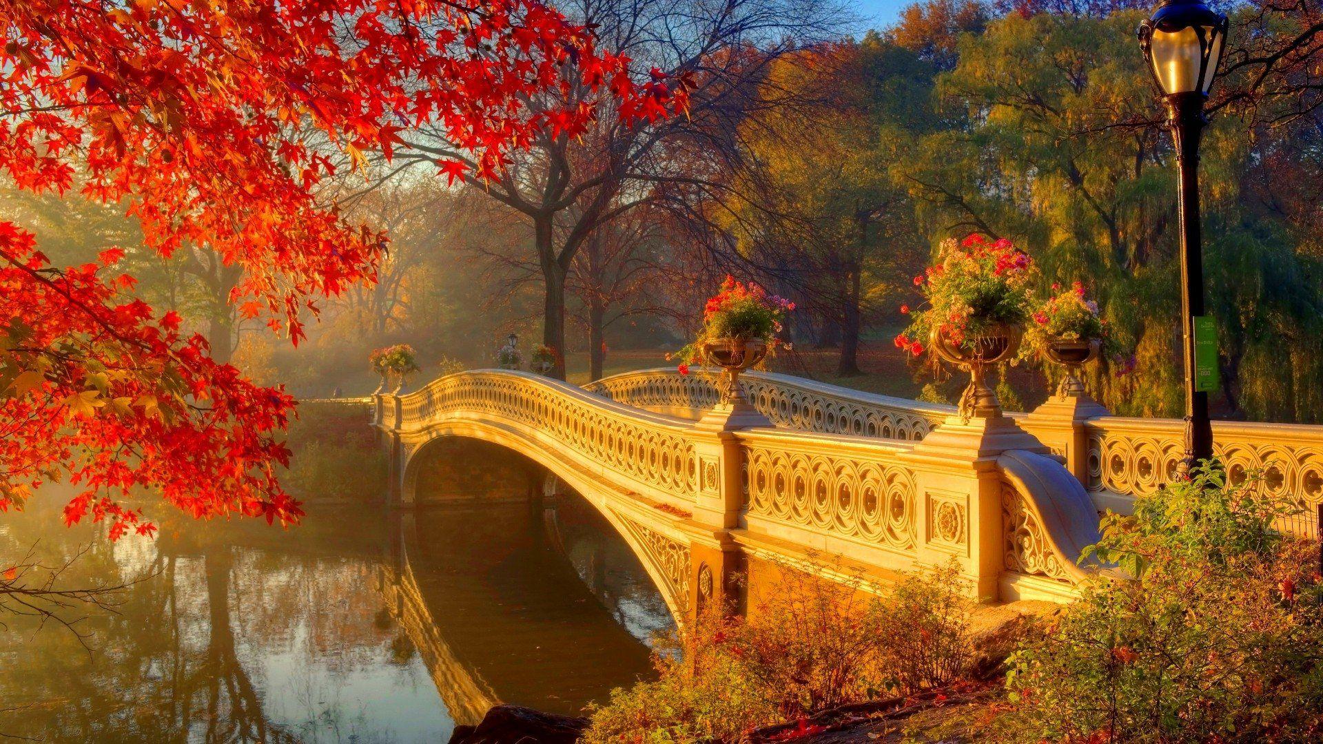 Central Park's Bow Bridge in Autumn Man Made Bridge