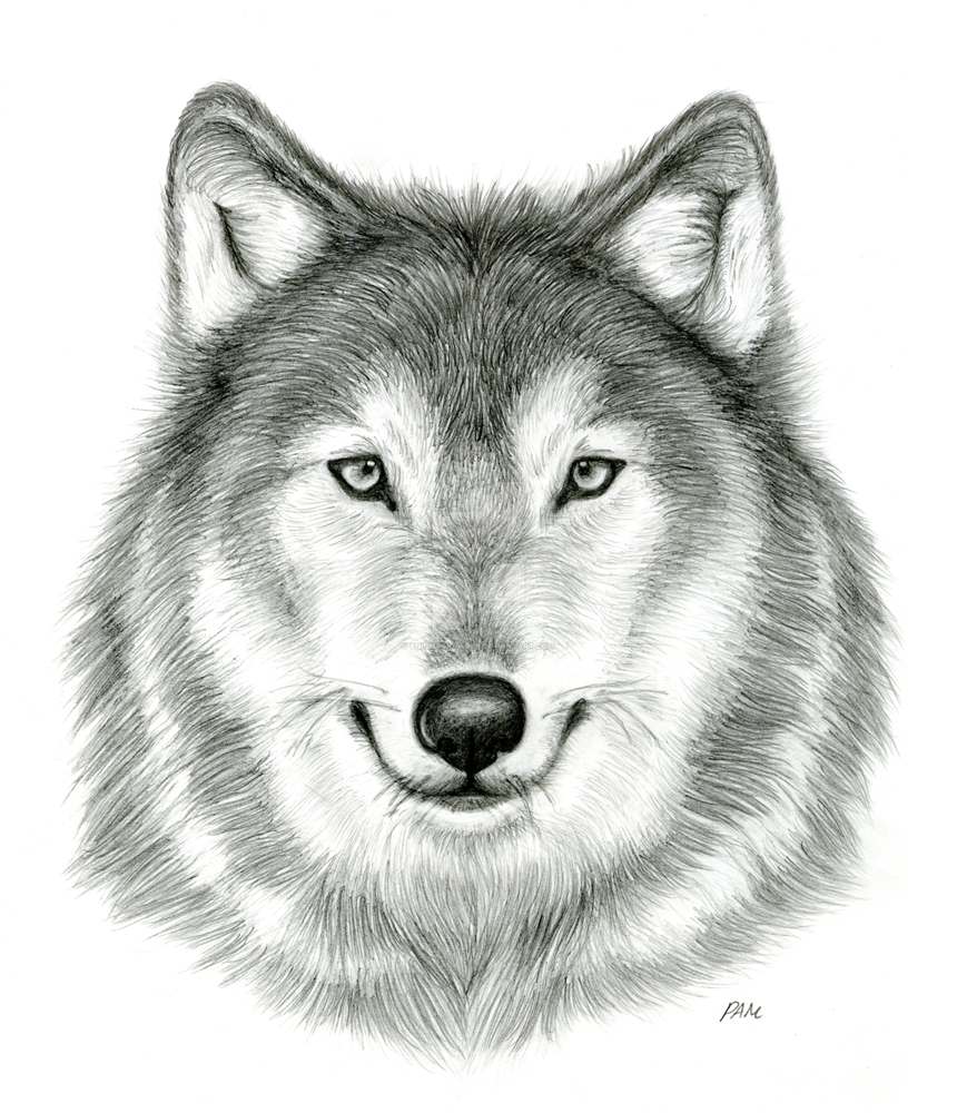 Wolf drawing dr odd