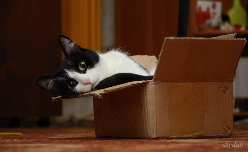 Katzen und Kartons :-)