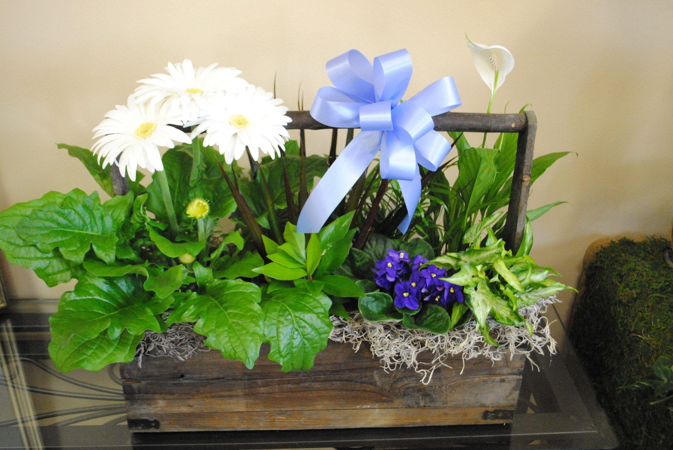 This arrangement includes a gerbera daisy plant, a peace