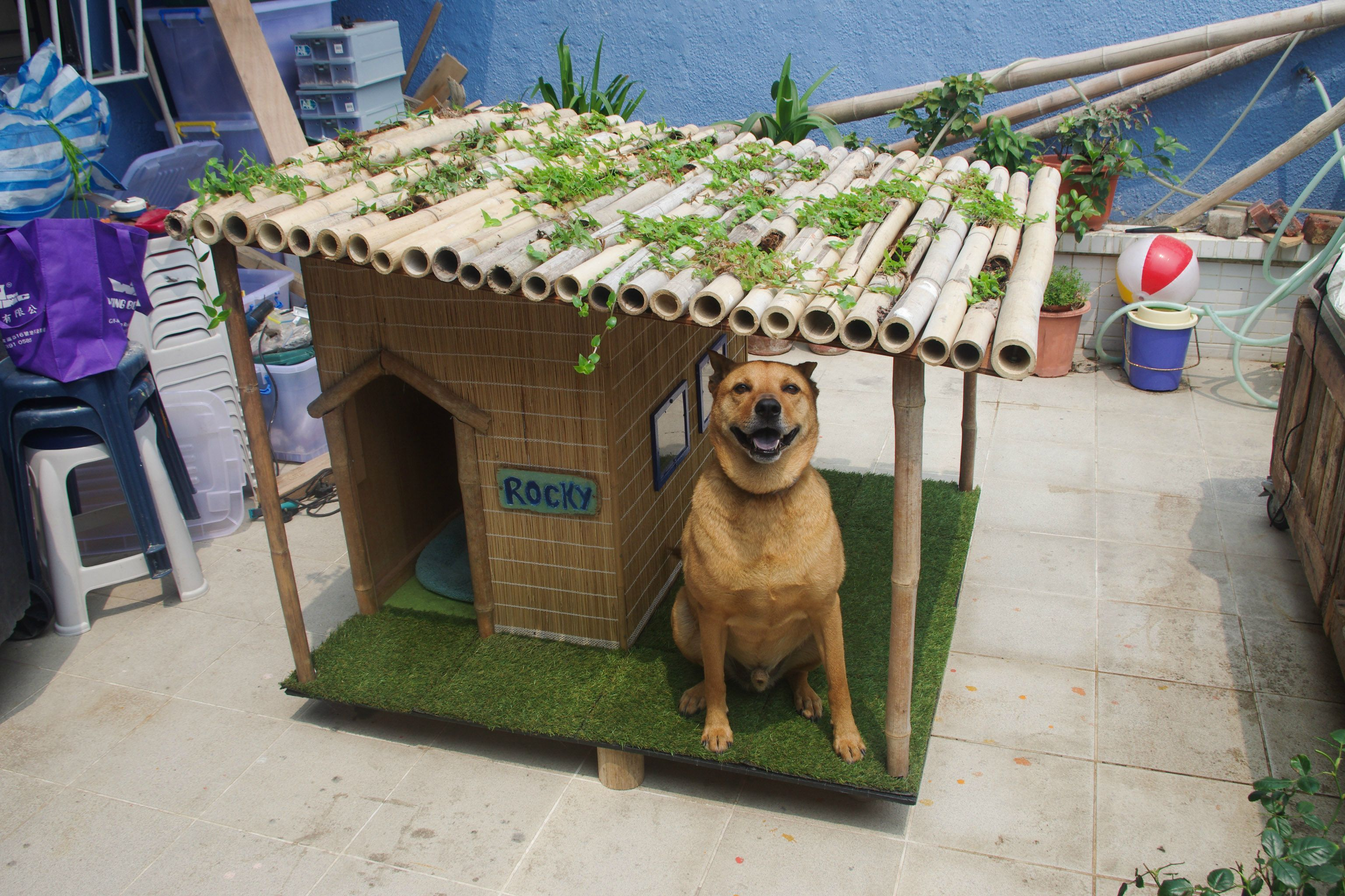 tropical dog house