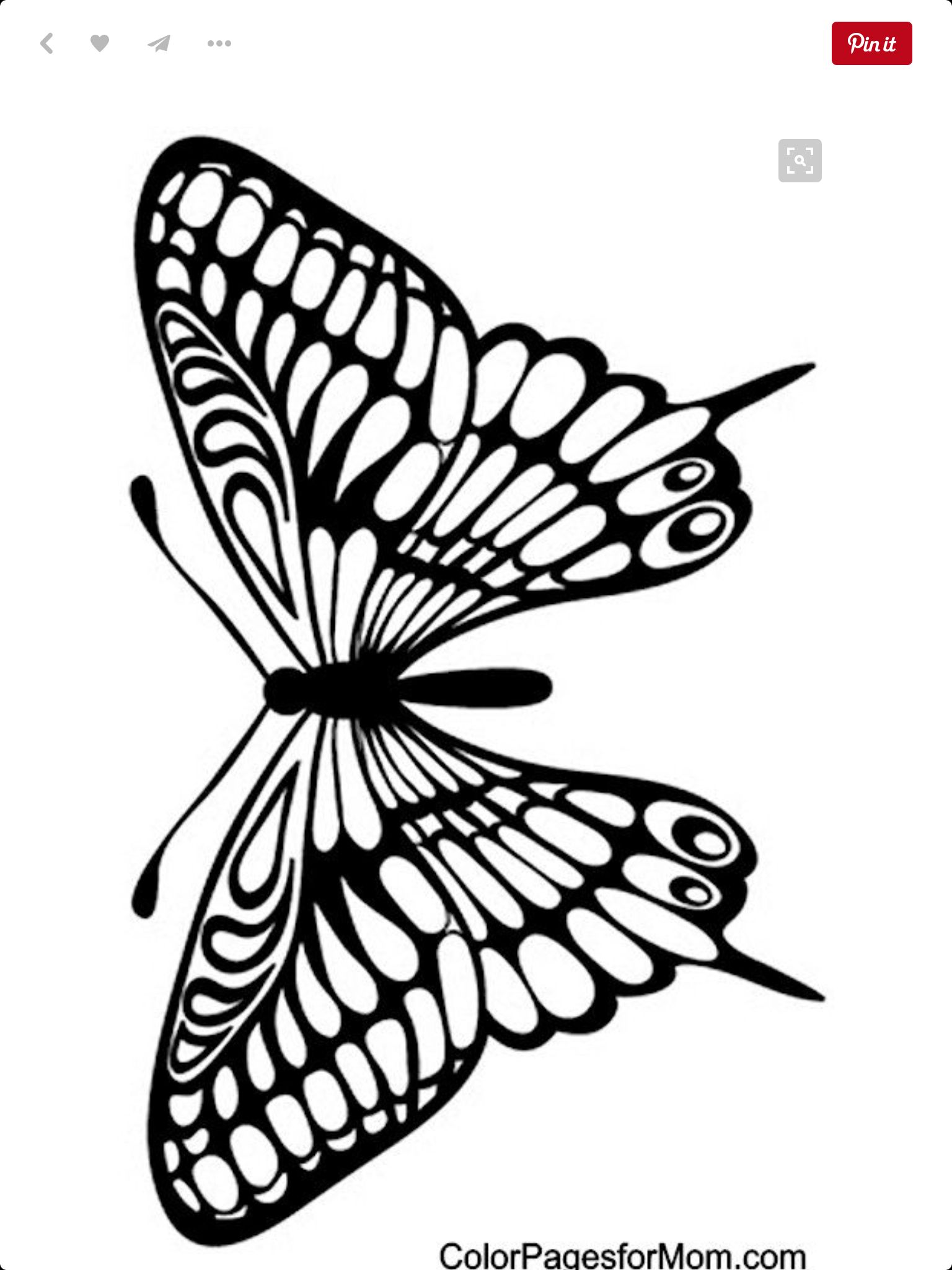 butterfly pattern (with images) | butterfly coloring page
