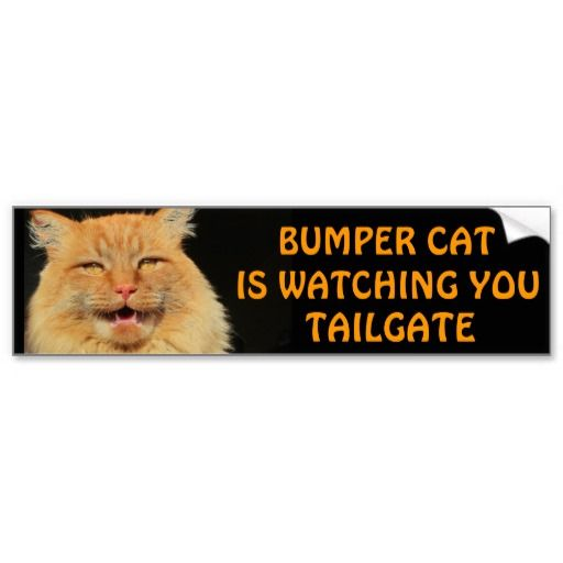 Bumper Cat is watching TAILGATE 13