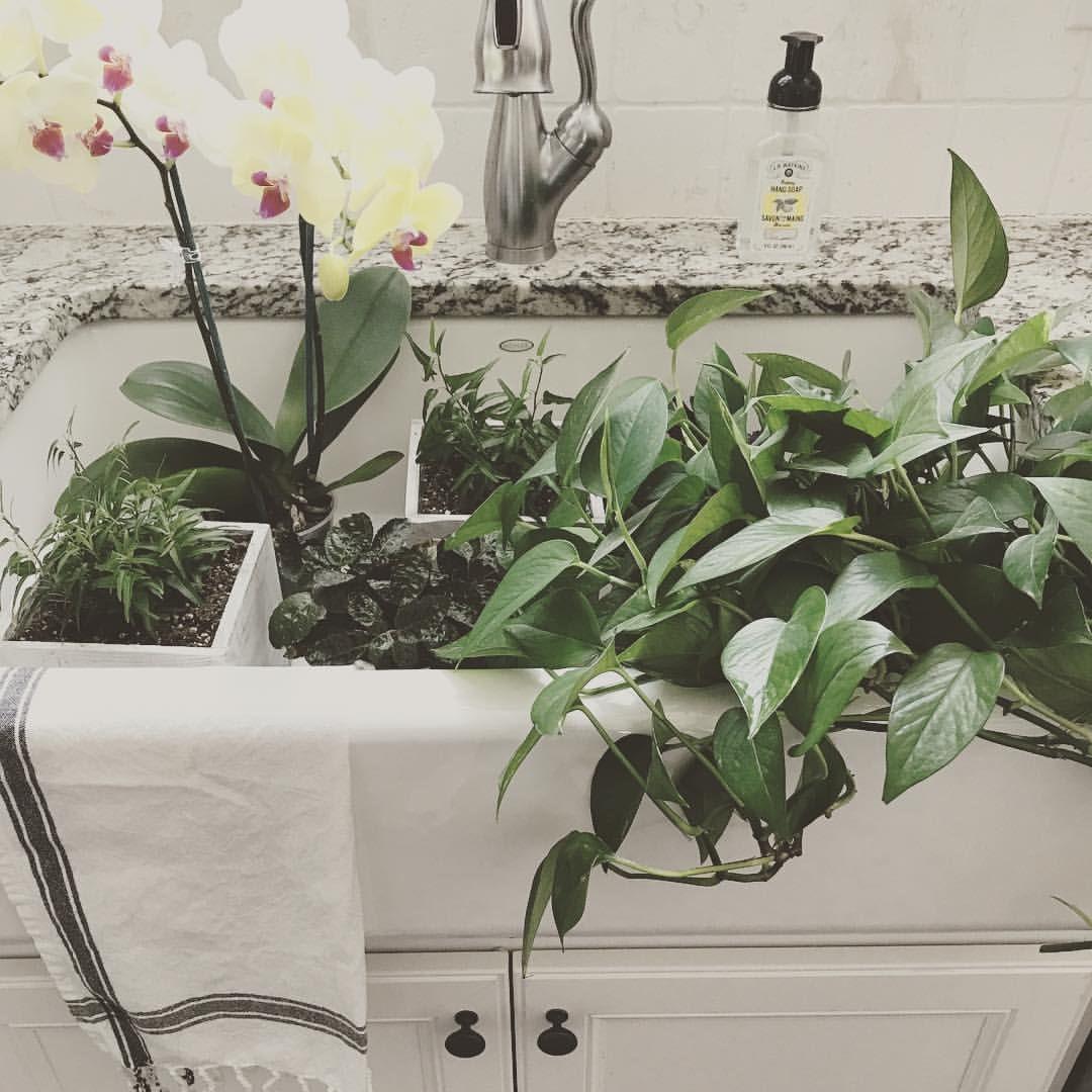Nursery Indoor Plants Near Me: Statelyhomelane @statelyhomelane