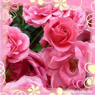 Sie finden auf dieser Seite lizenzfreie, weil von mir selbst fotografierte und verschönerte Bilder, kostenlos zum Download. #flowers #pinkflowers #nice #likeforlikes #likeforfollow