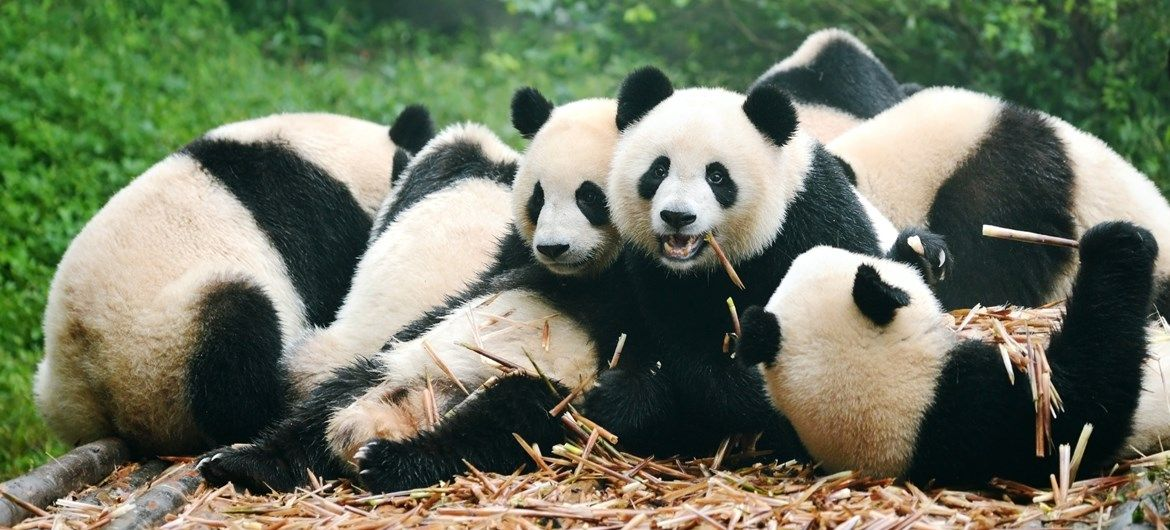 Looking for some cute PANDA-MONIUM? Check out our adorable list of ...