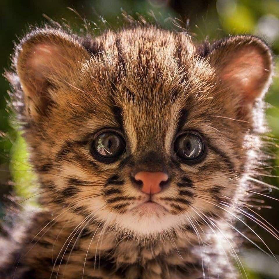 Pin von Harling auf Wild Cats ☢☢☢ Katzen, Süße katzen