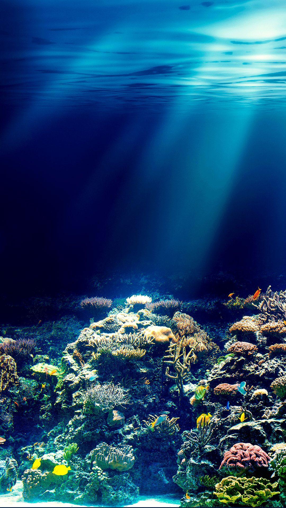 人気38位 水族館 Iphonex スマホ壁紙 待受画像ギャラリー 水 壁紙 風景の壁紙 庭作りのアイデア