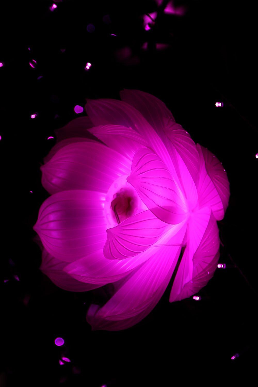 Flower Wallpaper Download Beautiful Flowers Wallpapers Flower Wallpaper Beautiful Flowers Images Hd