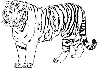 Gambar Mewarnai Gambar Gambar Mewarnai Harimau Untu Anak
