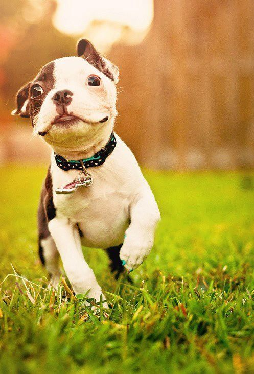 puppy love Animals Pinterest Follow me, Happy and To find out