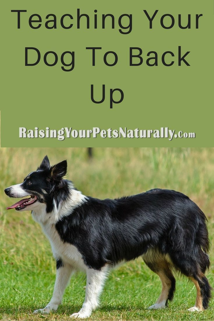 Dog Training And Teaching Dog Tricks Teaching Your Dog To Back Up