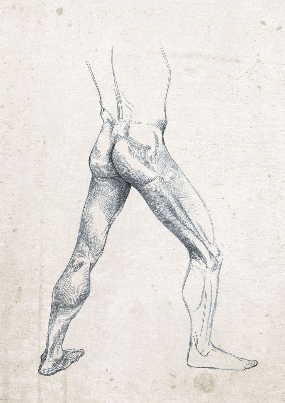 Anatomia Perna on Pinterest Leg Anatomy | Anatomy | Pinterest ...