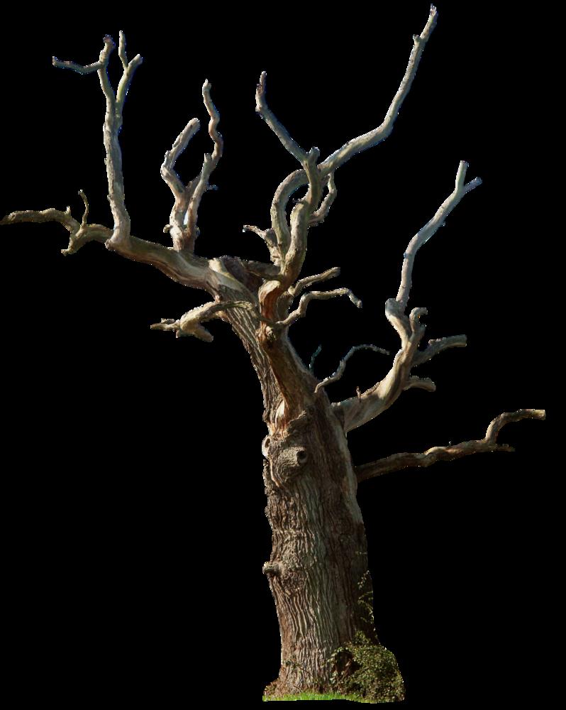 Dead tree 02 png by gd08 on deviantART