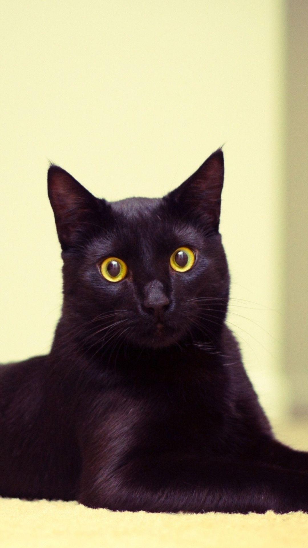 Cat Black Cat Lying Beautiful iPhone 6 wallpaper Cat