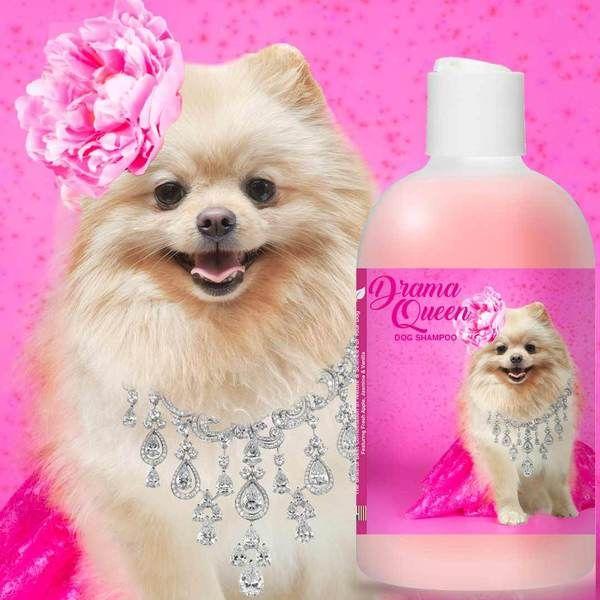 Pomeranian Drama Queen Shampoo Pomeranian Pomeranian Dogs Dog