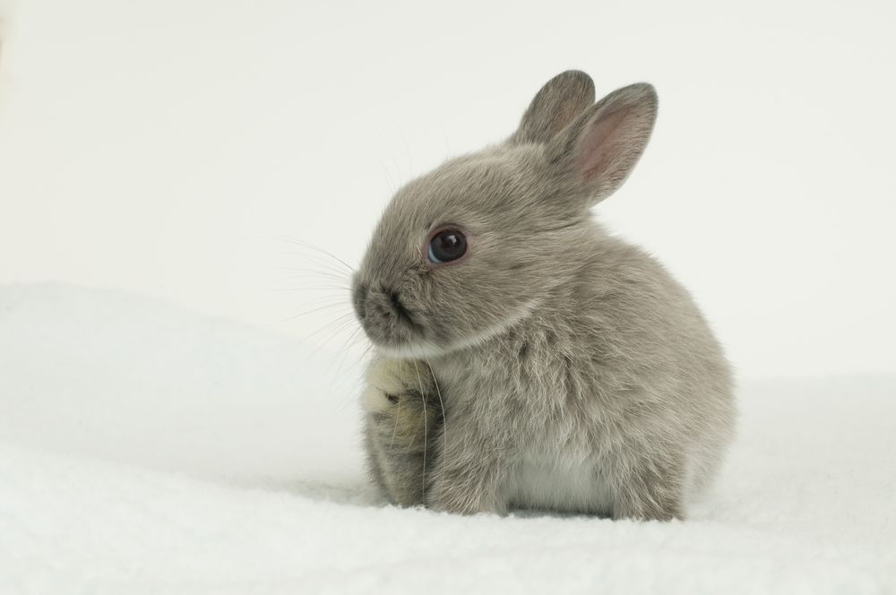 13++ Tiniest animal in the world images