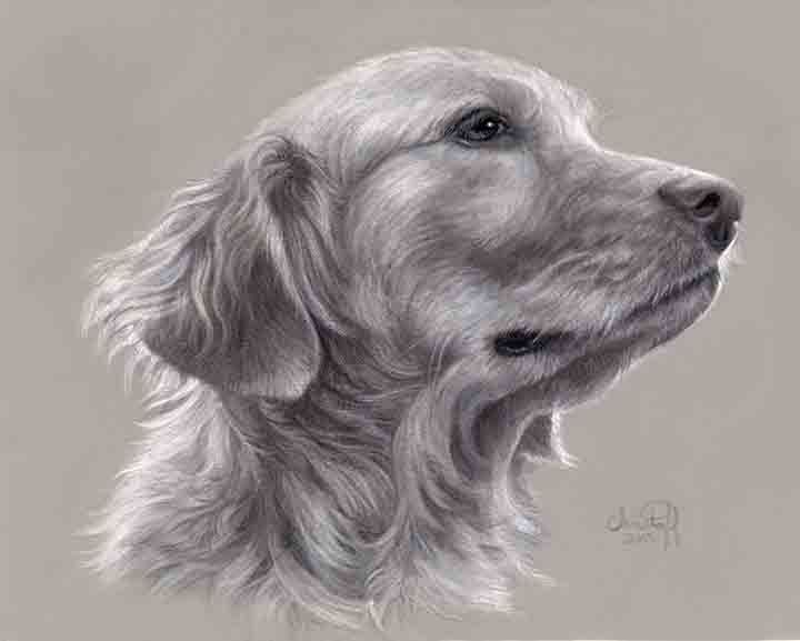 "Emily Christoff Flowers, ""Bailey,"" pastel, charcoal and conte on gray Canson Mi-Teintes paper, 8 x 10 in"