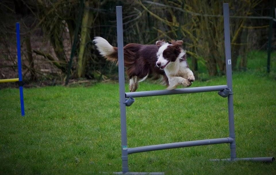 22 Super Duper Border Collies We Re Excited To Share Border