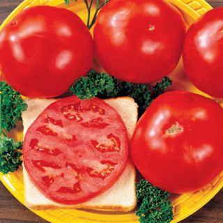 Celebrity Hybrid Tomato Seeds P Pkt Of 30 Seeds Tomato 640 x 480