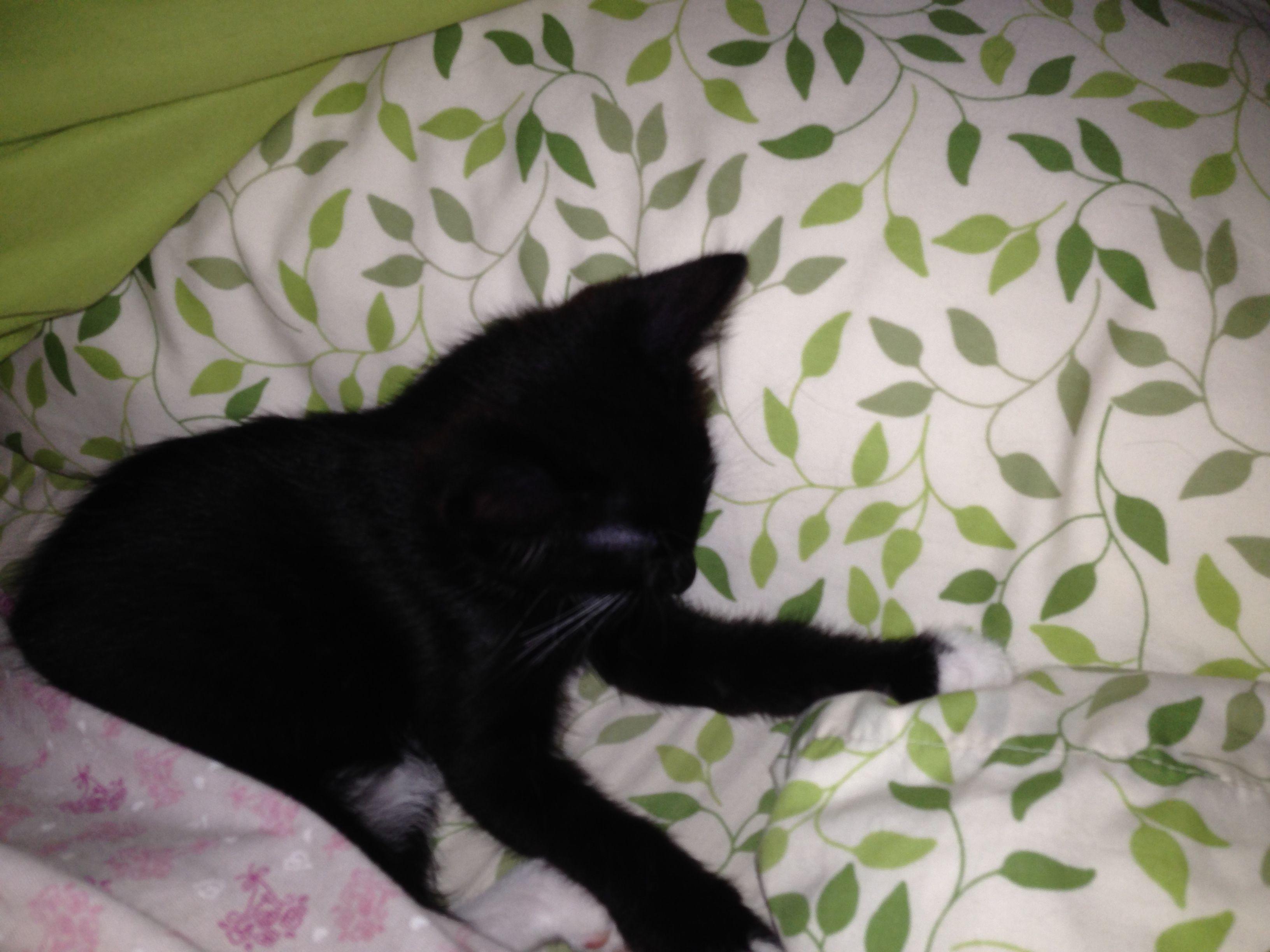 Jazz Sleeping Kittens Animals Cats
