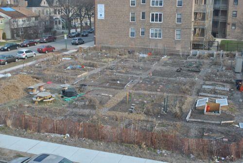 62nd and Dorchester Community Garden in Chicago, IL