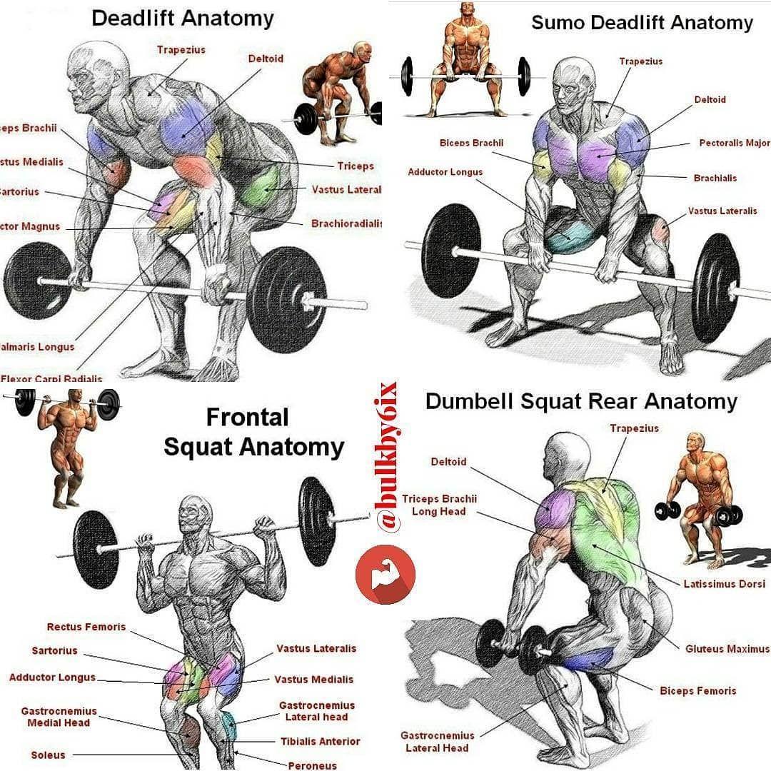 Список всех упражнений в бодибилдинге с картинками
