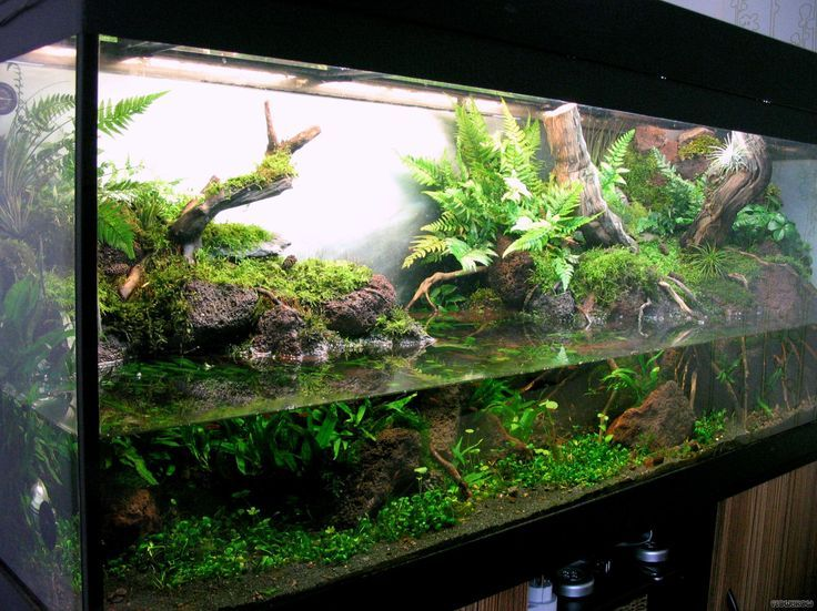 related image artsy pinterest aquariums vivarium and turtle. Black Bedroom Furniture Sets. Home Design Ideas