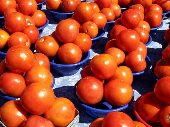 Tomatoes for Sale by DesignbyRita on Etsy, $25.00