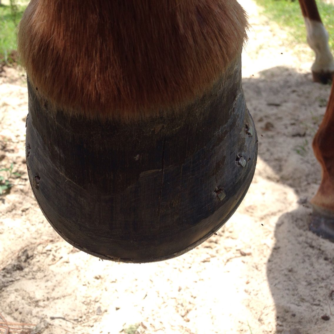 Shoes are good for horses that have a short heel