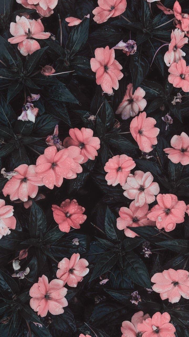 iPhone wallpaper #wallpaper #flowerwallpaper #spring