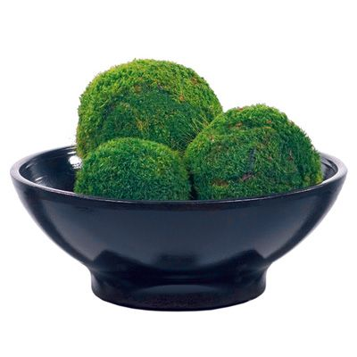 Decorative Moss Balls Entrancing A Beautiful Set Of Three Arkansas Preserved Mood Moss Balls Decorating Design