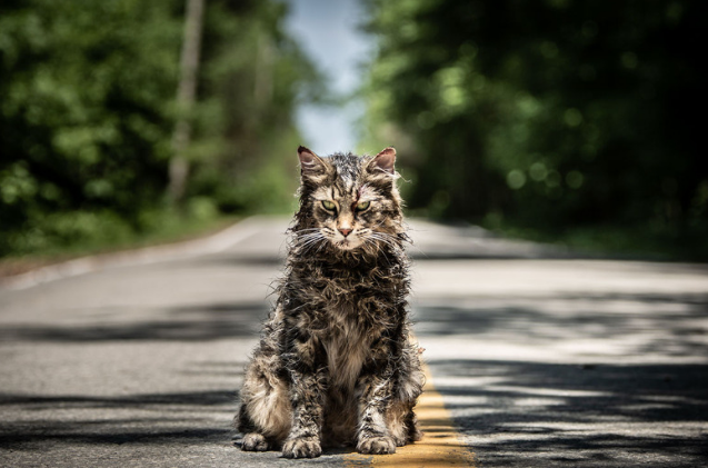 It Took 5 Cats To Nail The Role Of Church In New Pet Sematary