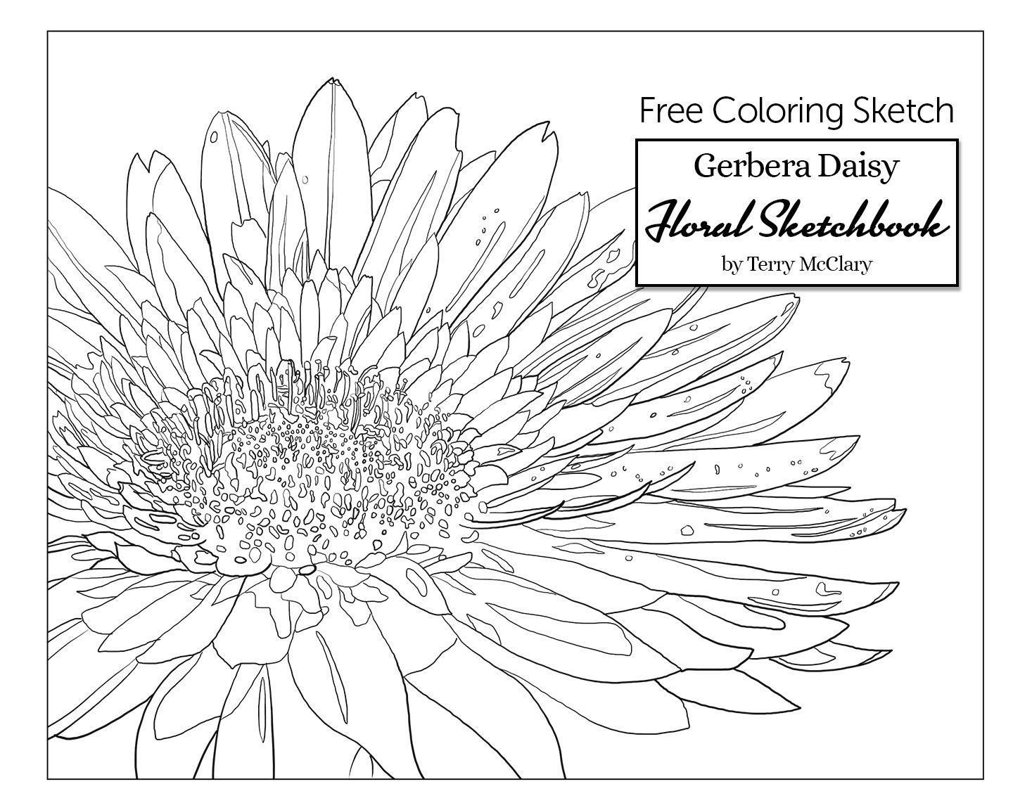 Free adult coloring page gerbera daisy floral sketchbook adult