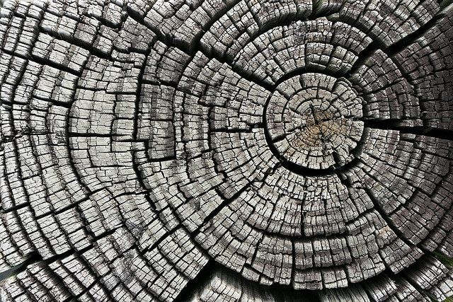 Cracked Tree Stump Spirals In Nature Pattern Photography