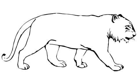 Tiger Without Stripes Coloring Page Free Printable Coloring Pages Animal Coloring Pages Coloring Pages Zoo Animal Crafts