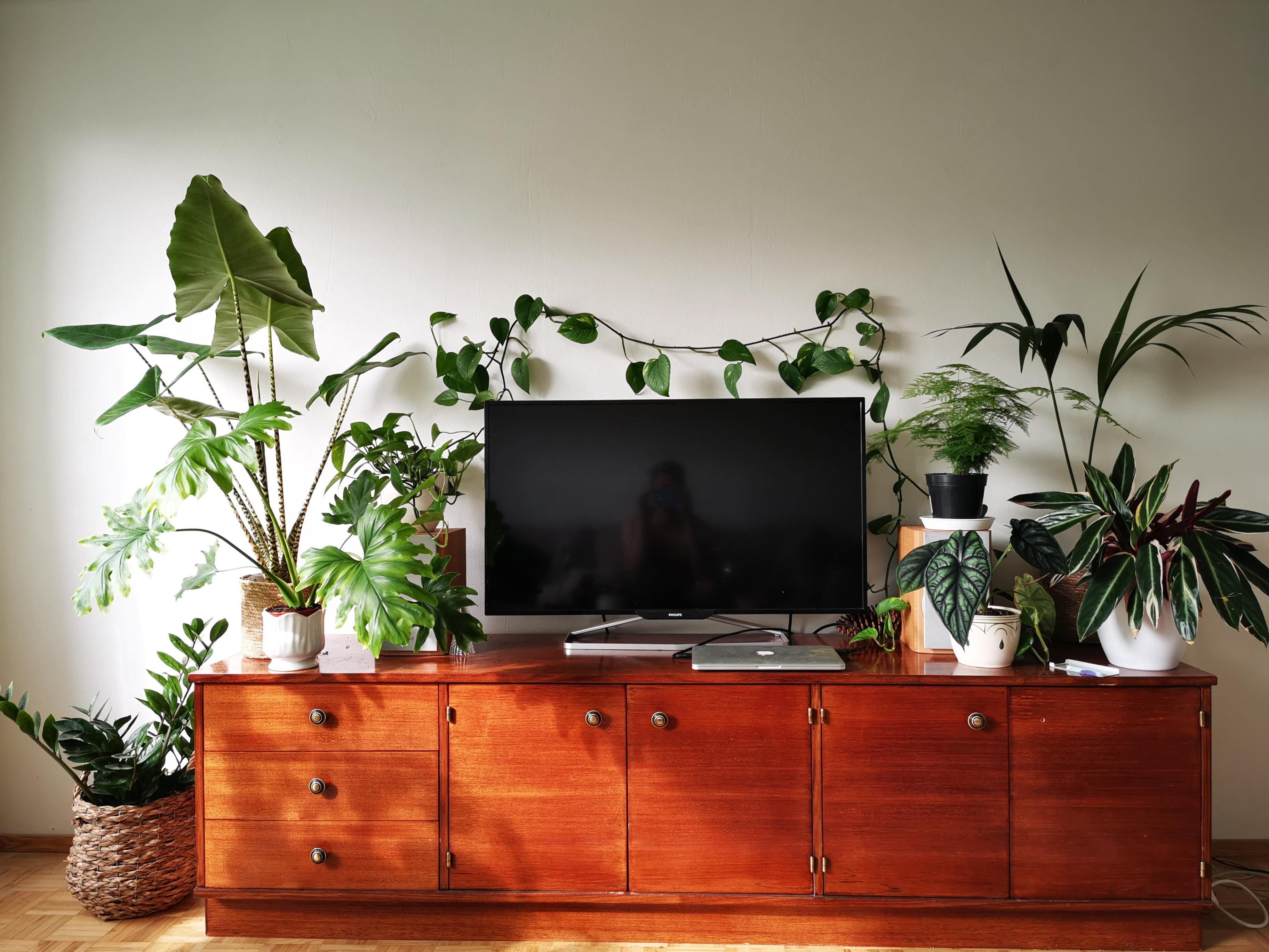 Tv Setup Plants Home And Living Flex Room Tv In Bedroom