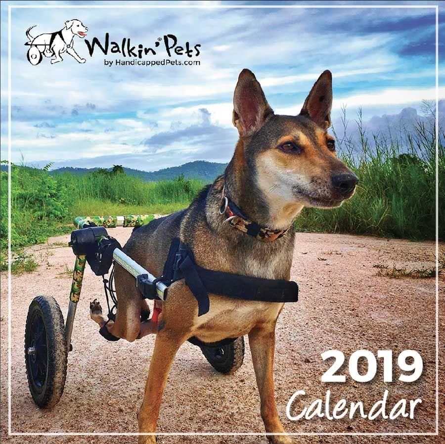 2018 Walkin Pets Calendar Contest Submissions Dog Wheelchair Pets Pet Blog