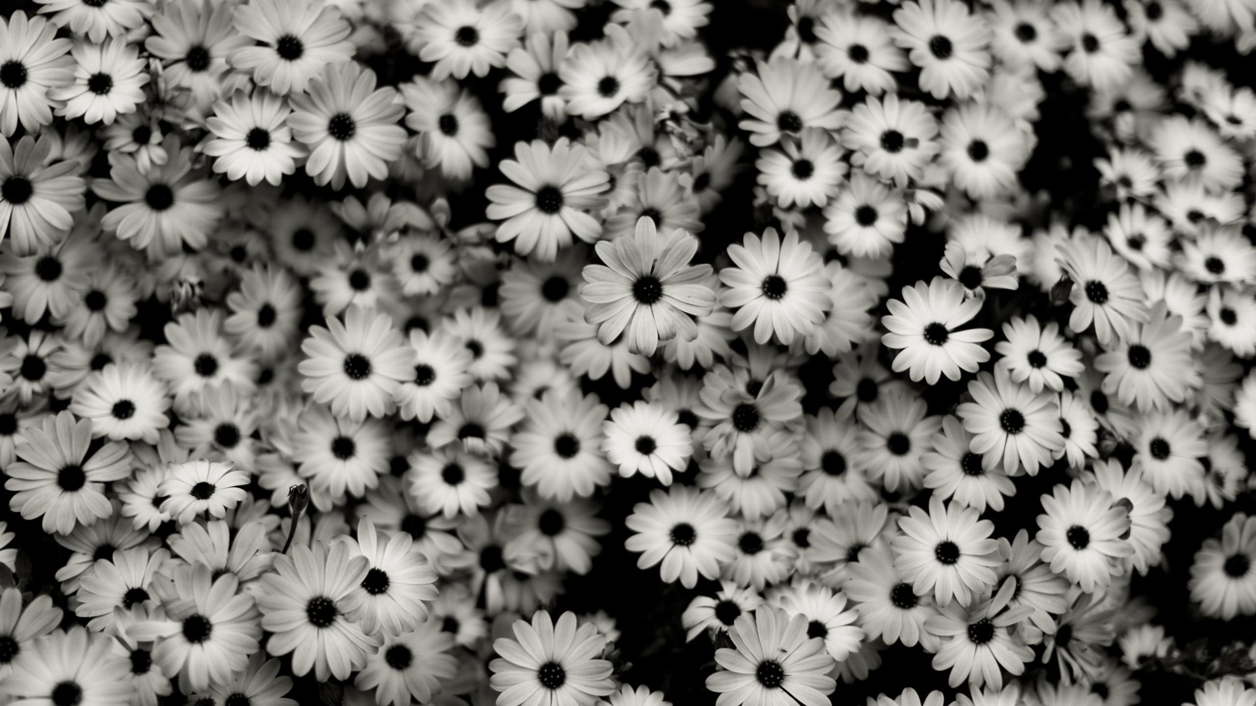 Black And White Vintage Wallpaper For Mac QXeT5