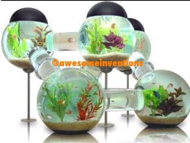Awesome fish tank