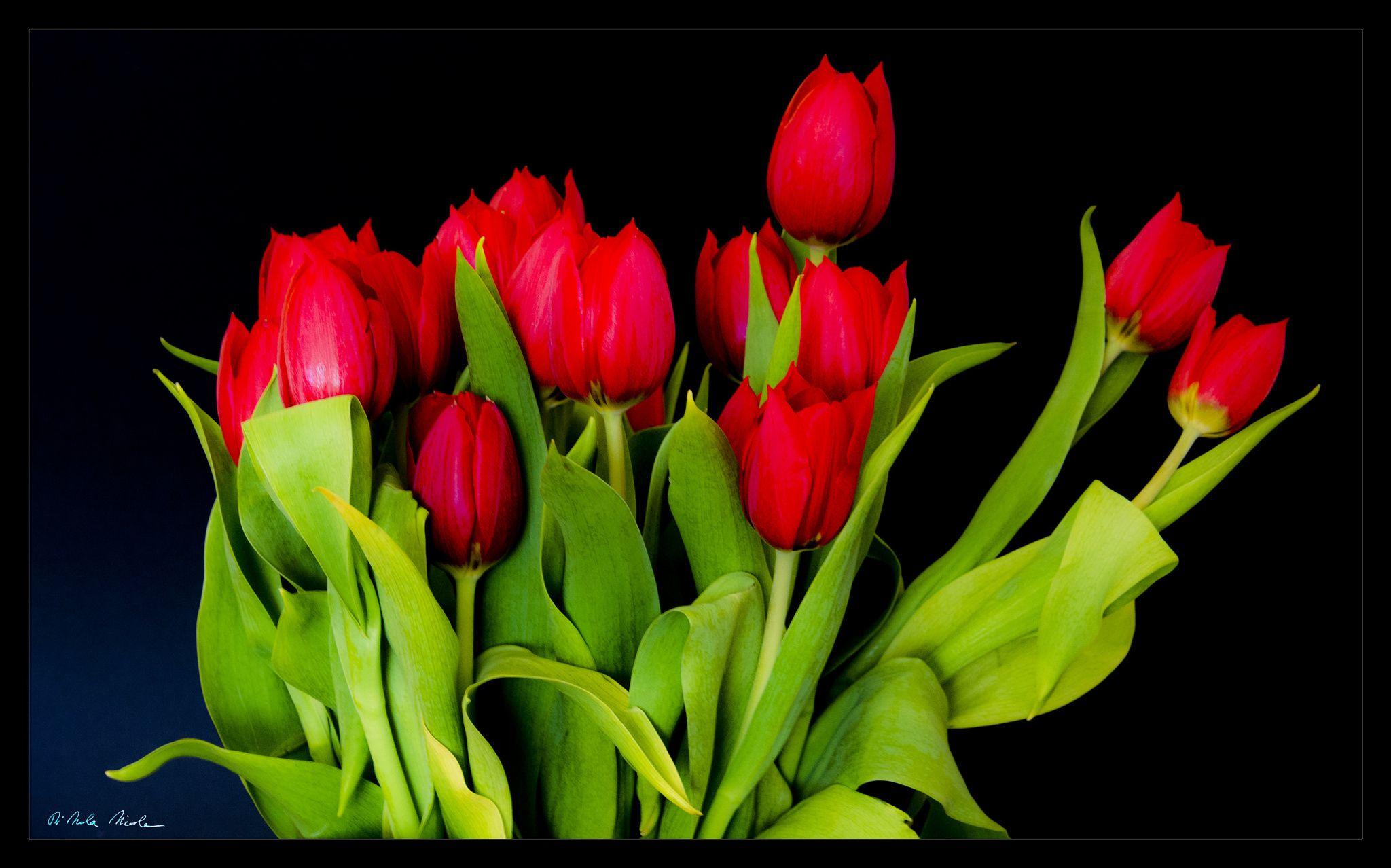 Mazzo di tulipani rossi by Nicola Di Nola on 500px