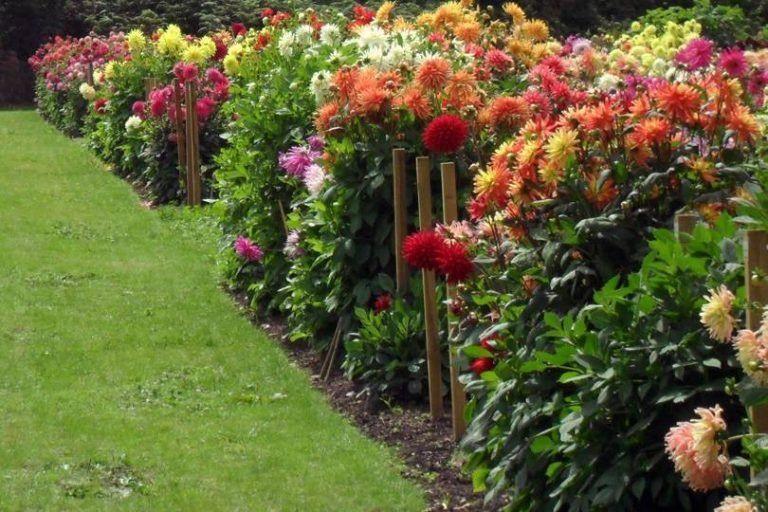 Always So Wonderful Dahlia Garden Design Engineering Basic In 2020 Growing Dahlias Dahlias Garden Flower Garden