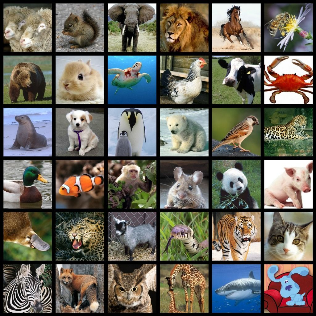 images of all animals   what do all of these animals have in common    Animals, Rare animals, Cute animals